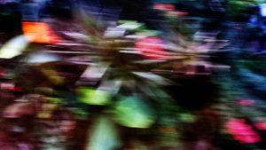 Jakarta blur plants edited